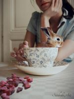 Bunny in cup by Sandrahm