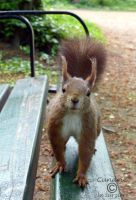 Squirrel 90 by Cundrie-la-Surziere