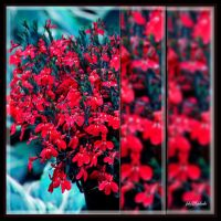 Red flowers. . . . . . . by gintautegitte69