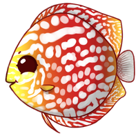 Discus by Norm27