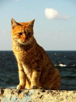 Alexandrian Cat 4 by overmood