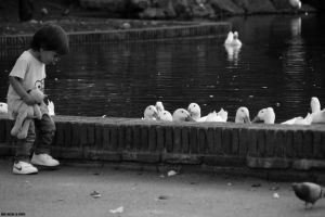 Ducklings and boyhood by EricLoConte