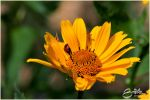 Ladybug in hiding by brijome