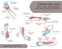 Dynamic Hands and Forearms by ArsonAnthemKJ