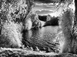 InfraRed Photo 1 by simre