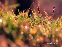 Morning Dew by Robynlee6