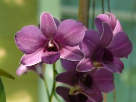 My Orchid34 by Otoff