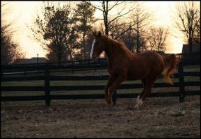 Chestnut Canter by Phantom303