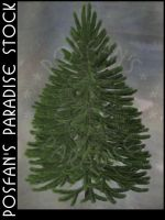Fir Tree 001 by poserfan-stock