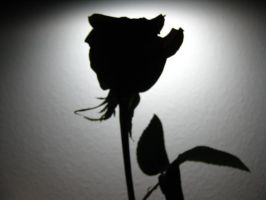Rose Silhouette by pickymice