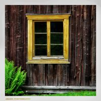 Window and Fern by Arawn-Photography