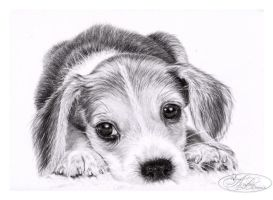 Beagle puppy by morvandelle