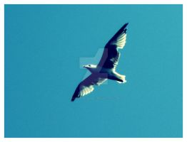 Sea-gull by whisper-my-name17