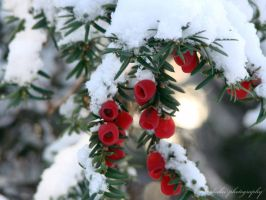 white, green and red by bogdanici