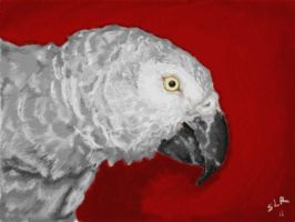 """Woody"" African Grey parrot by Sla-r"