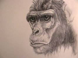 The thinking ape by chrisravensar