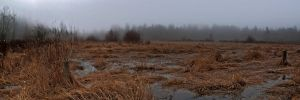 Misted Marsh by Picked-Jester