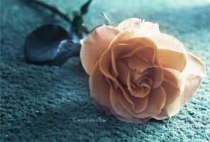 Kiss From A Rose III by icyabstractx