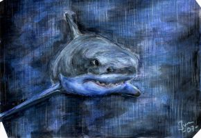 Great White by Jefrma