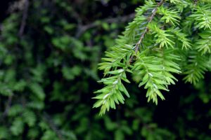 EverGreen, life everywhere by wagn18
