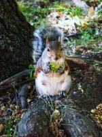 Squirrel by Holly-James