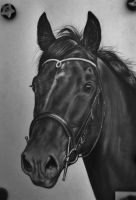 Horse drawing in black and white 2 by Nienke15