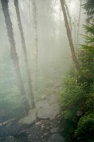 Trails in the MIst by sixgun-fighter
