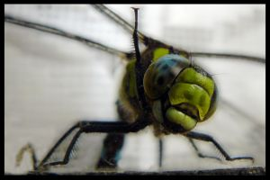 Dragonfly by tomsumartin