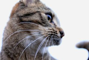 Cat Close-Up by Emz-Photography
