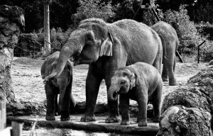 elephant family by DerTypvonNebenan