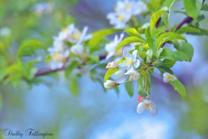 Love Makes Flowers Bloom by ShelbyMelissa
