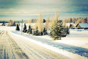 Row of snowbound firs by SizkaS