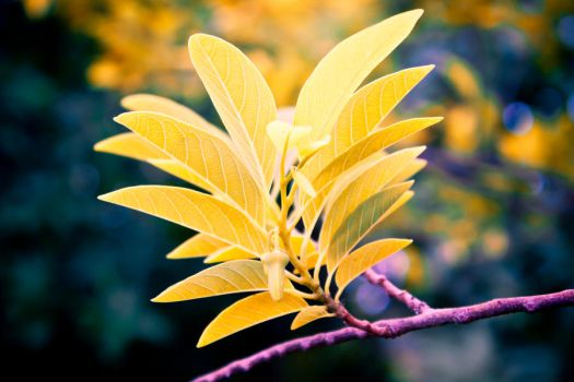 Yellow Leaves by ixant-88