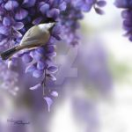 The Sweetness of Spring by Tammara