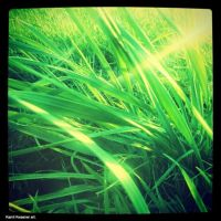 Grass summer season. by KwassiPl