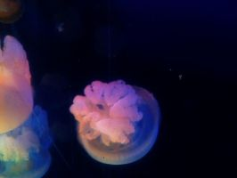 The Jelly Fish by TylerCreatesWorlds