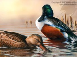 Northern Shovelers by Nambroth