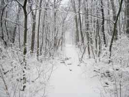 Forest Path in Winter 1 by Martut