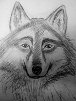 rate reduction wolfness by ghost13warrior