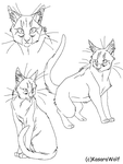 Realistic Cat CS Template by KasaraWolf