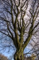 Knotty Tree HDR by johnwaymont
