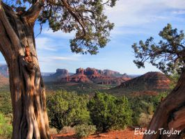 Cathedral Rock Framed by emwtaylor