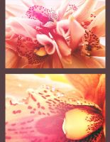 Orchid. by KariInlove