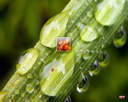 Drops on Leaf Logon by PhK-Dan10