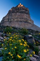 Point Wildflowers by mikewheels
