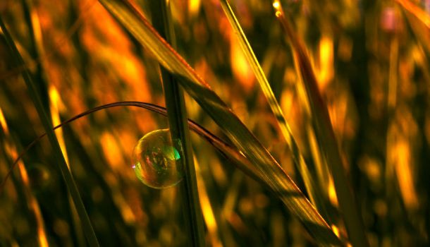 In a bubble by darkHunTer2009