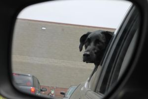 Waiting in the car by Jessilicious1806