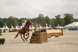 Eventing Stock - Triple Bush / Hovering Horse by LuDa-Stock