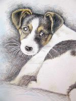 Jack Russell Puppy by ArtsandDogs