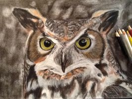 great horned owl drawing by MelieseReidMusic